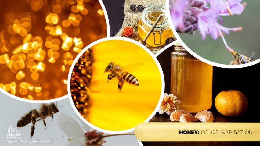 Color Inspiration Slide 24 - Honey